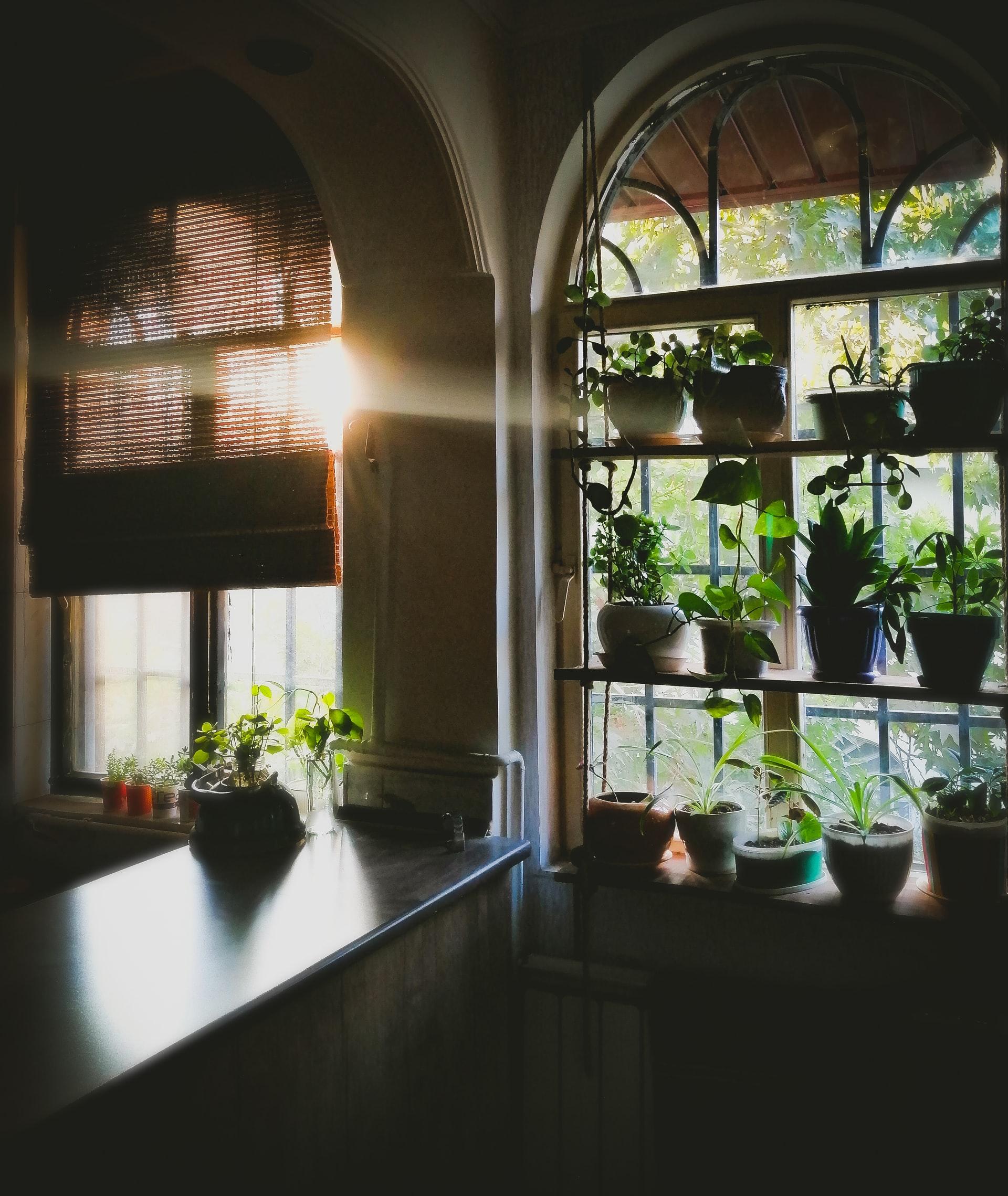 planten voor raam